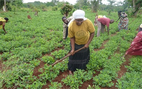 African-farmer